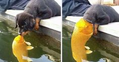 Puppy Kissing A Fish Inspires A Hilarious Photoshop Battle (10+ Pics) https://plus.google.com/+KevinGreenFixedOpsGenius/posts/Bc6CP73HYkv
