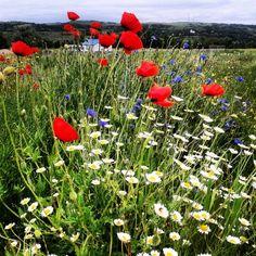 #wildflowers Green Landscape, Macros, Wildflowers, Plants, Wild Flowers, Planters, Plant, Planting