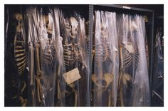 Skeletons in storage at the Mutter Museum