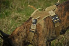 Flowers Harness for hiking. Modular Search Dog Harness