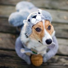 Fancy - Squirrel Dog Costume. @Reilly Milbauer Is that Skid in there? I wasn't aware that he modeled on his down time