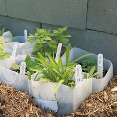 Get a bunch of perennials cheaply by planting seeds in milk jugs and putting them outside in winter or early spring.The milk jugs are mini greenhouses. No grow lights, no fussy watering schedule. In spring, you have perennials to plant in your garden! Seedlings, Outdoor Gardens, Container Gardening, Garden, Winter Garden, Perennials, Plants, Seasonal Garden, Grow Lights