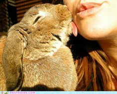 OMGGGG! I wish my bunny would do this! @Ashley Sims