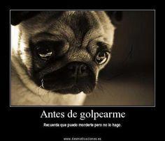 NO AL MALTRATO ANIMAL !!