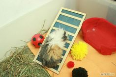 Ladder, Pom Poms and cuddly toys for single guinea pigs :). Make Your Guinea Pig Happy Without a Second Guinea Pig Step 5 Version 2.jpg
