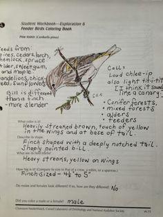 Handbook Of Nature Study Pine Siskin