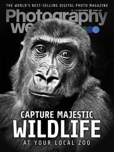 #Photography Week Magazine 155. Go on a zoo safari - Learn how to #capture striking #wildlife shots of captive animals.