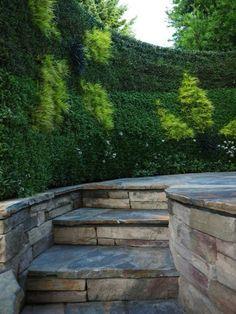 Hecke als Sichtschutz im Garten