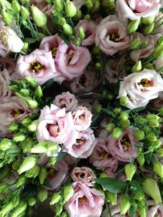 Lisianthus 'Arena Light Pink'.Sold in bunches of 10 stems from the Flowermonger the wholesale floral home delivery service.