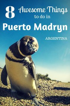 Don't miss out on visiting this amazing spot in Argentina! Here are the best things to do in Puerto Madryn. Don't miss this place off you list of places to visit in Argentina.