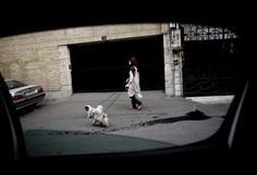 An Iranian woman walking her dogs in the rich Elahiyeh district in northern Tehran on June 24, 2013. For decades, pet dogs were rare and thus tolerated in Iran, where the Islamic beliefs cherished by the vast majority of traditional Iranians consider dogs as 'najis,' or unclean but in recent years the soaring number of pet dogs, which are mostly owned by the middle class keen on imitating Western culture, has alarmed the authorities who have now criminalized walking dogs in public, or ...