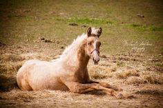 Horse #Horse #mare #foal #stallion #animal #animals #nature #photo #photography #fliiby #images #yyazilim #people #nature