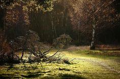 De Groote Peel in dauw; een schitterend plaatje!