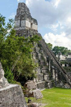 Great Jaguar, Tikal, Guatemala by Guatemala Photo St