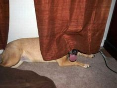 These dogs are not very good at hide and seek (25 Photos)