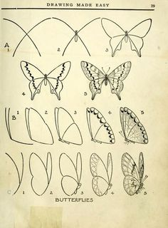 Schmetterling zeichnen / 40 Easy Step By Step Art Drawings To Practice - Bored Art Drawing Lessons, Art Lessons, Drawing Practice, Animal Drawings, Pencil Drawings, Pencil Art, Drawing Animals, Drawing Sketches, Drawing Ideas