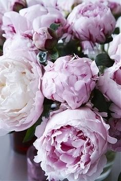 peonies or those english or french roses? lavendar peonies would be amazing. i used to have pastel yellow and peach....not much sent like the heirloom pink, burgandy and white which smell heavenly, but they sure were pretty before they died off. the heirlooms come back each year no matter how abused or neglected they are. the trade off for the wonderful colors...