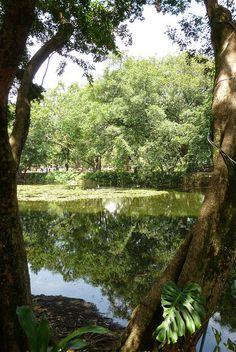 Jardín Botánico, Medellin, Colombia