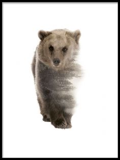 Tavla / poster med björn. Stilren poster med fotografi med dubbelexponering. Affisch som passar med Nordisk inredning.