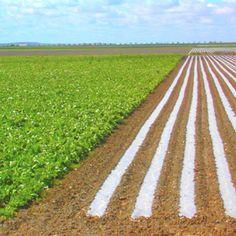 Agricultura y agua guardan una relación inseparable que siempre debe ir de la mano con el uso eficiente del riego en los cultivos. Vineyard, Country Roads, Outdoor, Natural Resources, Irrigation, Outdoors, Vine Yard, Vineyard Vines, Outdoor Games