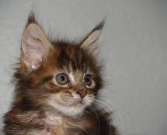 kittens share cute things at www.sharecute.com