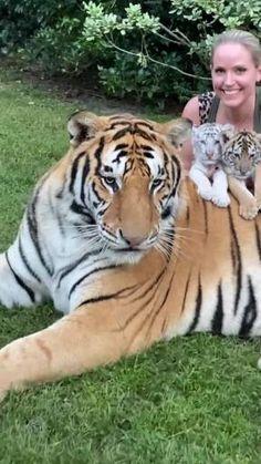 Cute Wild Animals, Cute Little Animals, Cute Funny Animals, Cute Cats, Nature Animals, Animals And Pets, Beautiful Cats, Animals Beautiful, Gato Gif