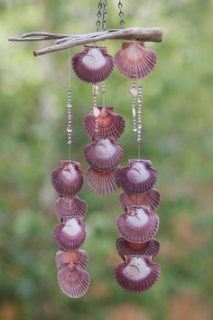 Wind chime made with Oregon Driftwood and Scallop Shells attched with eye screws Seashell Wind Chimes, Diy Wind Chimes, Seashell Art, Seashell Crafts, Beach Crafts, Blowin' In The Wind, Scallop Shells, Driftwood Crafts, Nature Crafts