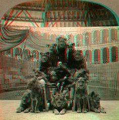 """Lion Tamer and Lions, Hagenbach's anaglyph 3D    ANAGLYPH, conversion of original card stereoview in my collection. """"6428 - Group of Lions, Hagenbach's"""" copyright 1905 Keystone View Company    This image views in 3D when wearing RED/CYAN 3D glasses. More images of this type can be found by searching """"anaglyph""""    The Original Stereoview is here: www.flickr.com/photos/depthandtime/4862109820/"""