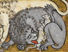 lion with the cubs Bestiary, England ca. 1200-1210. British Library, Royal 12 C XIX, fol. 6r