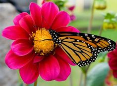 pics of flowers with butterflies - Google Search
