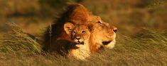 #africanluxury #keepdiscovering #eyeswildopen #travel #traveltip #luxurytravel #traveltheworld #tanzania #africa #travelagency #letsgo Travel Agency, Tanzania, Luxury Travel, Lodges, Safari, Travel Tips, African, Animals, Animais
