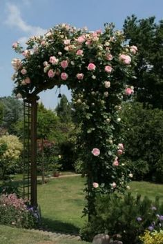 Rose Garden Long view of Pierre de Ronsard roses in bloom on an arbor. This variety is rated above an by the American Rose Society. These resilient flowers prefer full sun with open air circulation, regular moisture and pruning. Love Garden, Easy Garden, Dream Garden, Beautiful Roses, Beautiful Gardens, Arco Floral, Eden Rose, Rose Varieties, Climbing Roses