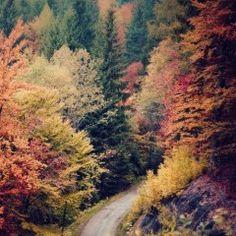 Autumn is the best season. Beautiful World, Beautiful Places, Beautiful Pictures, Beautiful Scenery, All Nature, Autumn Inspiration, Fall Season, Land Scape, The Great Outdoors