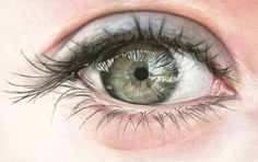 Colored Pencil eye