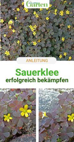 Garden Paths, Garden Art, Garden Landscaping, Garden Design, Real Plants, Types Of Plants, Indoor Garden, Outdoor Gardens, Oxalis Acetosella