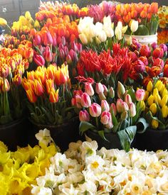 Seattle flowers photography Pinterest Seattle and Flower