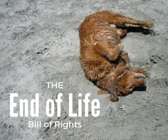 The Dying Pet's Bill