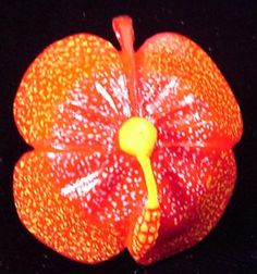 Wounaan Indian Hibiscus Pendant Carving-Panama 3.48666