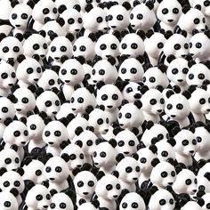 Instagramer verrückt nach neuem Suchbild: Findest du den Hund unter den Pandas?