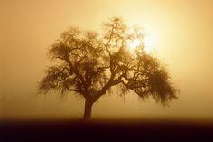 Sunlight And Tree wallpaper