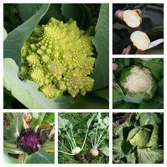 MIDT-TROMS side Forvelling av grønsaker