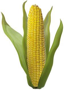 Крупа, которая выводит жир из организма      Благодаря уникальным свойствам, крупа из кукурузы поможет вывести из организма жир, а также окажет укрепляющее воздействие на здоровье Исследовав свойства кукурузной крупы, ученые пришли к выводу, что она богата диетической клетчаткой, которая играет важную роль в процессе вывода токсинов и радионуклидов из организма человека. Кроме того, она поможет очистить кишечника от продуктов распада.