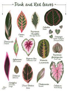 Plant Art, Plant Decor, Tropical Leaves, Tropical Plants, Hanging Plants, Indoor Plants, Plant Illustration, Vegetable Illustration, Do It Yourself Inspiration