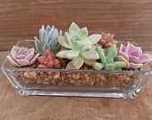 Succulent Centerpiece, Beautiful, Great For Weddings, Cocktail Parties And Other Special Events, Green Up Your Space. $24.95, via Etsy.