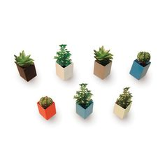 Off the Wall Mini Flowerpots by Thelermont Hupton