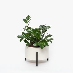 Modernica | Case Study Table Top Cylinder with Metal Planter