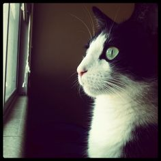 Tuxedo Cat/ Black and white