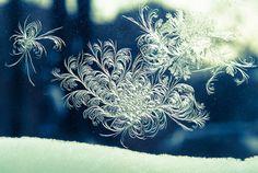 Polar Vortex 2014:  Chicago Deep Freeze | via Tumblr