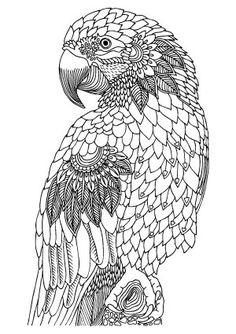 Bird printable adult coloring page Adult ColouringOwls