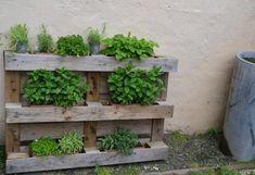 De kleine tuin   BouwAlmanak